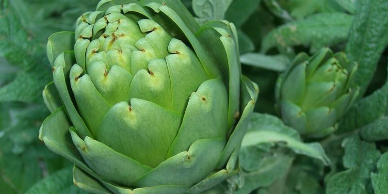 5 πράγματα που δεν ξέρεις για την αγκινάρα